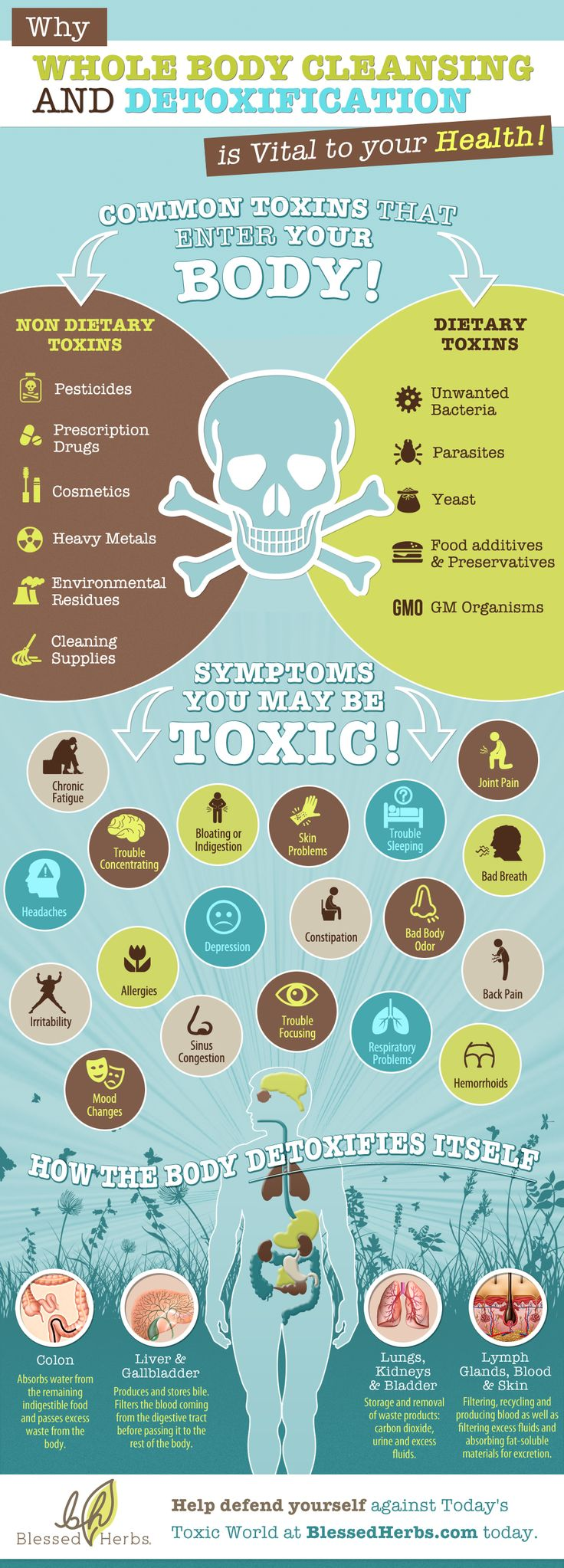 Identify common toxins that enter your body and symptoms you may be toxic + how the body detoxifies itself