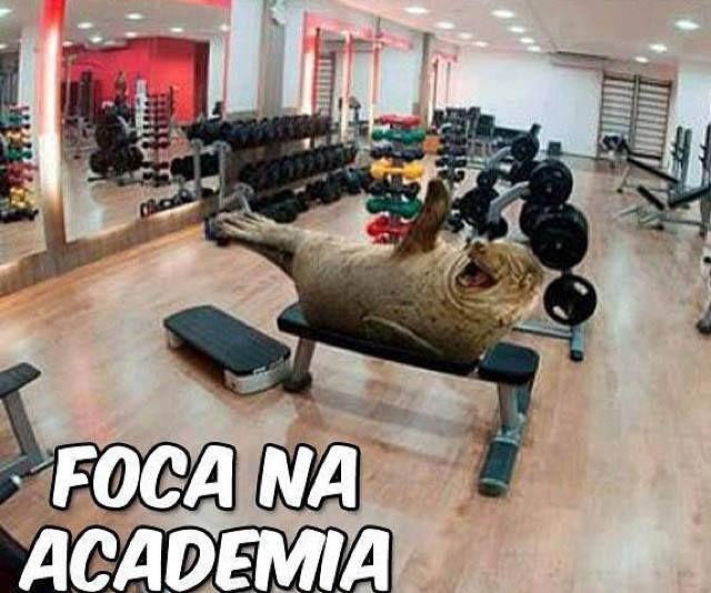#foca #academia
