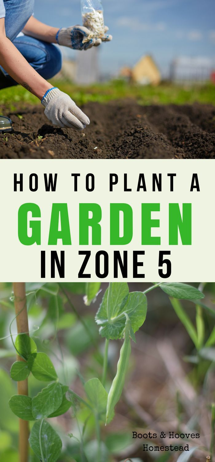 8742 best How Does Your Garden Grow images on Pinterest   Plants ...