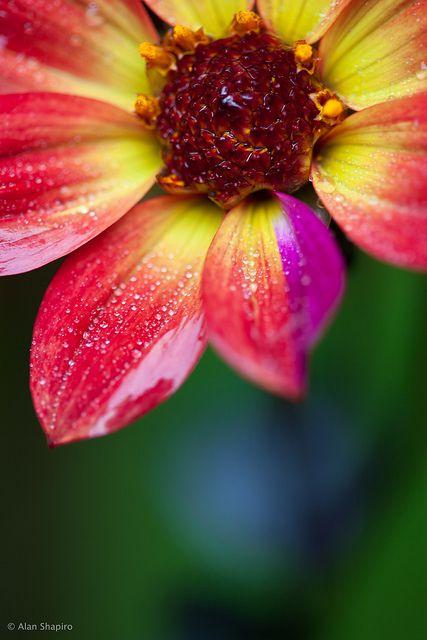 livrer des fleurs 11 #fleurs #bouquet