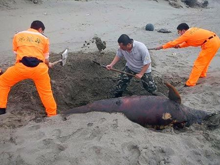 ... Earth - Three Dead Dolphins Found In Four Days In Miaoli, Taiw