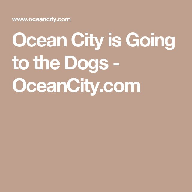 Ocean City is Going to the Dogs - OceanCity.com