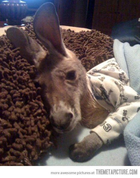 A baby kangaroo in pajamas….don't even act like your day didn't just get better