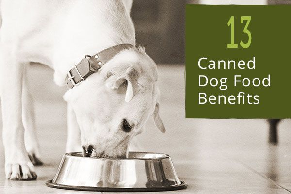 Who knew canned could be so grand? 13 Canned Dog Food Benefits.