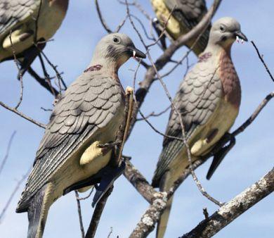 How-To: Dove Hunting Basics