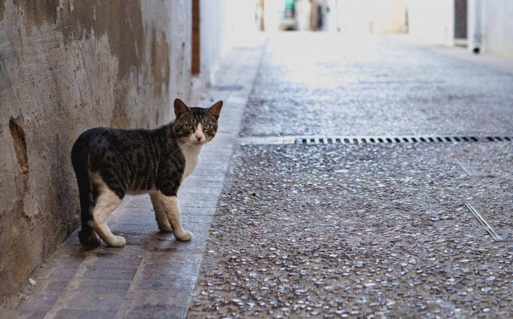 Casi 138.000 perros y gatos abandonados en España en 2016