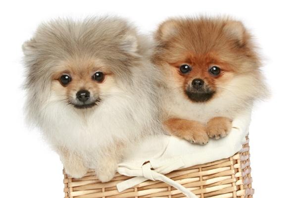 Cachorros4