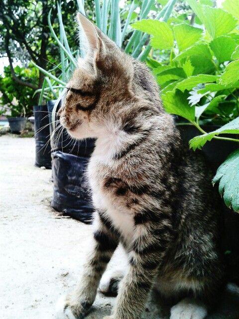 #cute #cat #pose