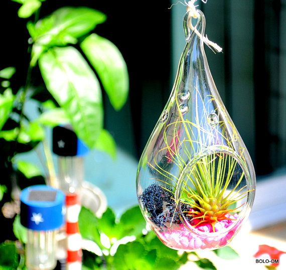 Air Plant Terrarium - Love Pink - tear drop hand blown glass hanging terrarium kit. Includes air plant and items shown in the picture.