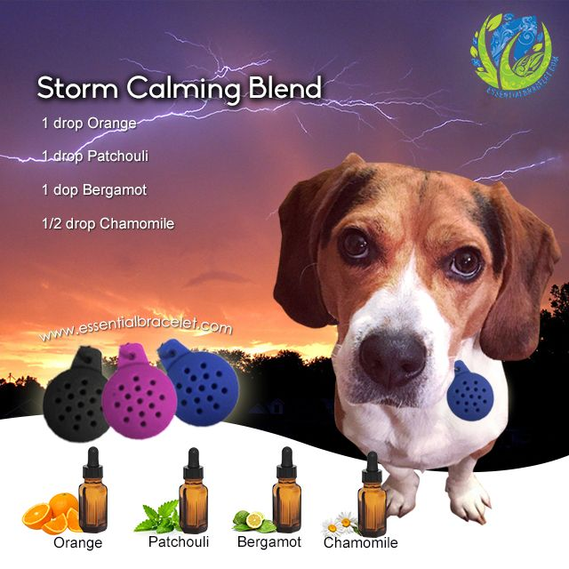 Is your pet afraid of storms? Try the storm calming blend in your pet's essential oil pet diffuser from Essential Bracelet.