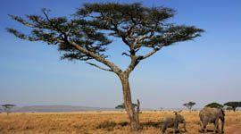 Viajes a Tanzania: Viaje a KENIA/TANZANIA y ZANZIBAR con Viajes Trekking y Aventura  http://www.trekkingyaventura.com/africa/viajes-a-Kenia/kenia-tanzania-experience.asp