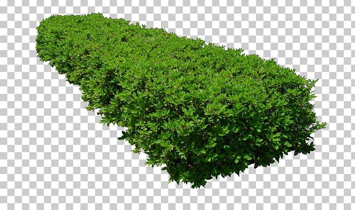 Png Plants For Photoshop Free Download Tree Photoshop Trees To Plant Grass Photoshop