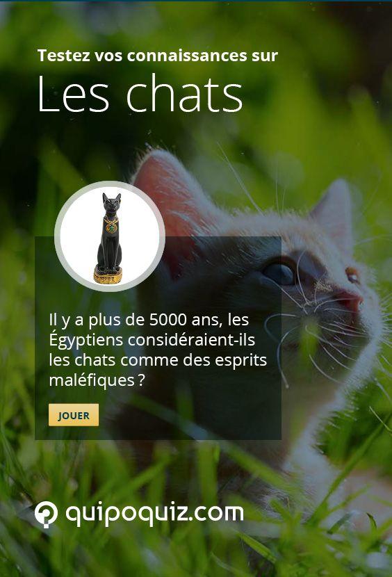 Les Égyptiens considéraient-ils les chats comme des esprits maléfiques? Découvrez des faits étonnants sur les chats avec ce jeu de Quipo Quiz : http://quipoquiz.com/quiz/les-chats/