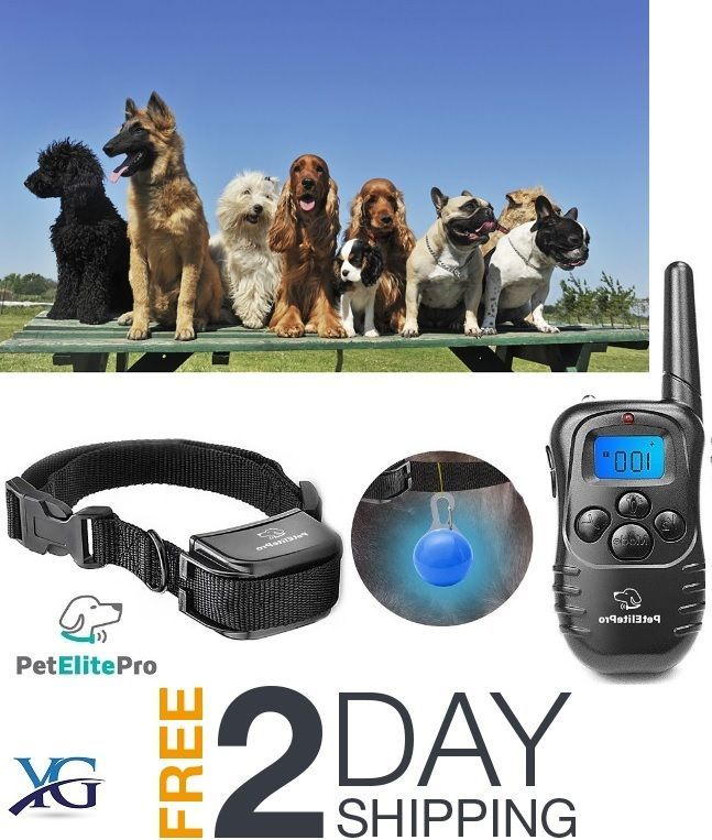 THE SAFEST AND EASIEST WAY TO CURB BAD BEHAVIOUR. It features a flashing, beeping, vibration and electric shock mode that you can engage whenever your pup is being naughty. Comparable to vaster bark collar, petsafe bark collar, dogtra dog collar, petsmart dog collar, citronella dog collar, sportdog dog collar, and innotek dog collar. | eBay!