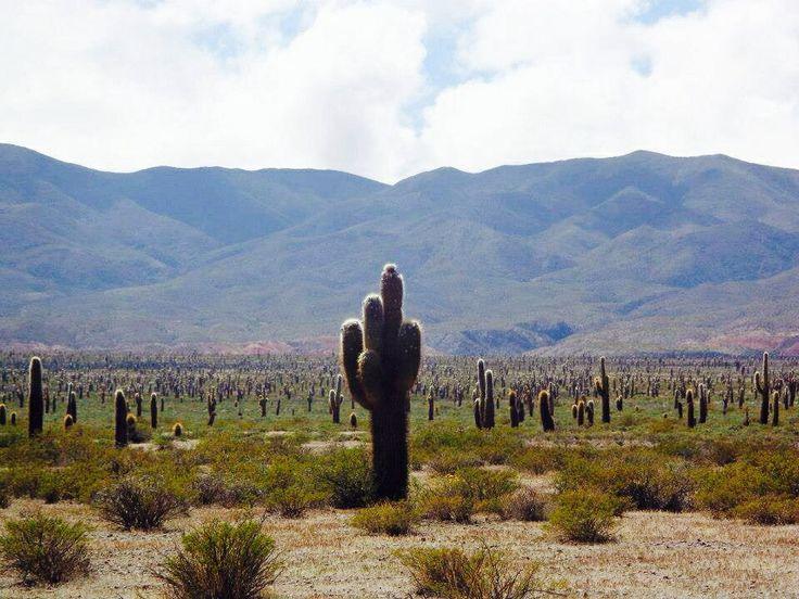 Parque Nacional Los Cardones, Argentina.