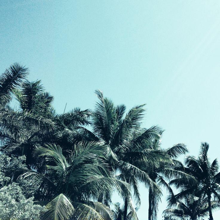 Palm tree club