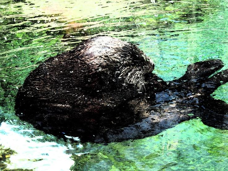 Otter gotter rest