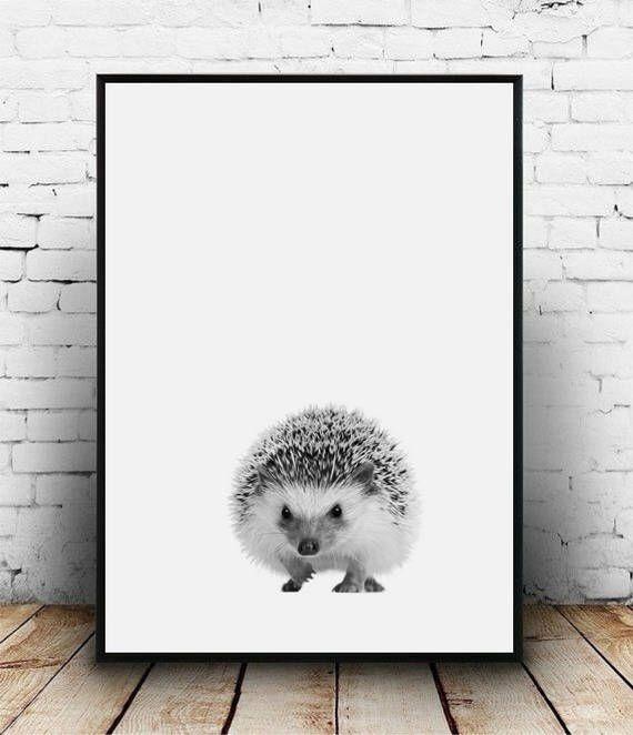 Hedgehog print, Hedgehog poster, Printable hedgehog nursery decor, Hedgehog photo, Hedgehog wall art, Hedgehog nursery art Woodland hedgehog by homelyspace on Etsy https://www.etsy.com/au/listing/552985945/hedgehog-print-hedgehog-poster-printable