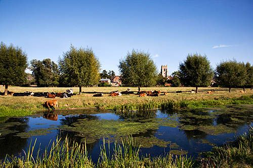 UK Leaflet Usage - Cattle in the shade of trees on the Water Meadows Sudbury Suffolk England by Mark Sunderland, via Flickr