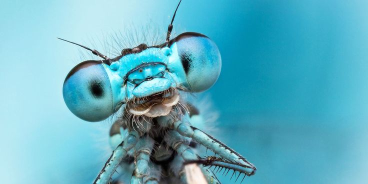 Part One: Dragonfly facts