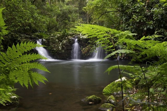Some small but lovely falls on Brindle Creek in the Border Ranges