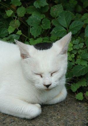 ピンポイントで 反則的なブチ : 猫の模様が可愛すぎる ぱっつん、ザビエル、刺青もん - NAVER まとめ
