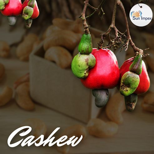 Cashews 365*24*7? Get the best quality cashew nuts from Sun Impex Cashew Nuts are cultivated on a wide scale to obtain the valuable nut meat, i.e. the fruits or kernels, which are often encased in hard shell covering. Sun Impex is a dry fruit nuts supplier offering wholesale and bulk quantities of nuts, primarily cashew nuts. Sun Impex offers premium quality cashew nuts that are processed using the latest technology. To buy them, visit : http://bit.ly/Nuts_Cashews