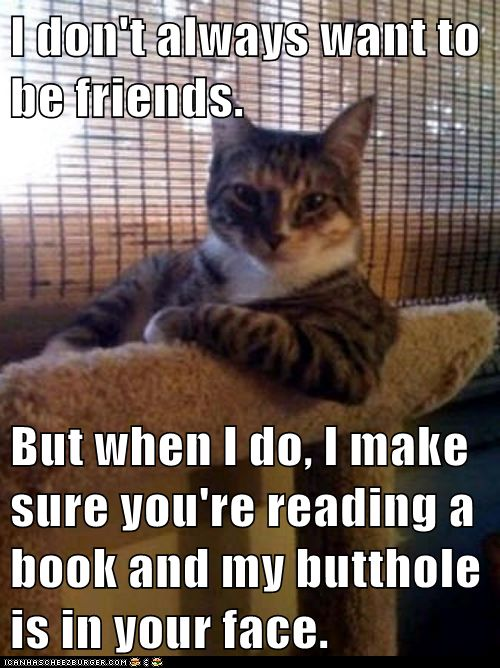 Pretty much!: Cats, Animals, Truth, So True, Funny Stuff, Interesting Cat, Humor, Things