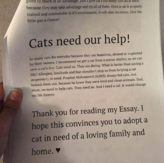 В Техасе 11-летняя девочка написала родителям 6 страниц о причинах своей любви к кошкам http://oane.ws/2017/07/02/v-tehase-11-letnyaya-devochka-napisala-dlya-roditeley-o-prichinah-svoey-lyubvi-k-koshkam.html  В Техасе 11-летняя девочка на шести страницах объяснила свои причины своей любви к кошкам и объяснила родителям, почему в их доме должен появиться домашний питомец. Сестра автора доклада опубликовала фотографии «документа».