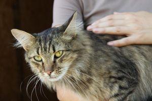 Милый кот ищет дом! Мустанг пристроен в 2011 г.