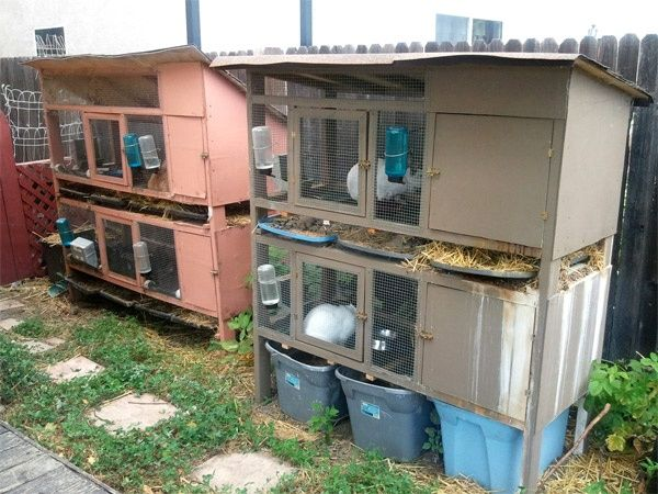 Worm composters set up under rabbit hutches. Also these people feed bindweed to their rabbits.