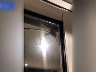 Quand tu as une araignée géante sur le mur !! Terrifiant