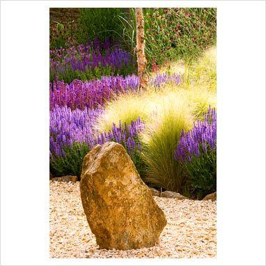 Dry garden with gravel and rocks, Salvia 'Wesuwe', Salvia x superba and Stipa tenuissima