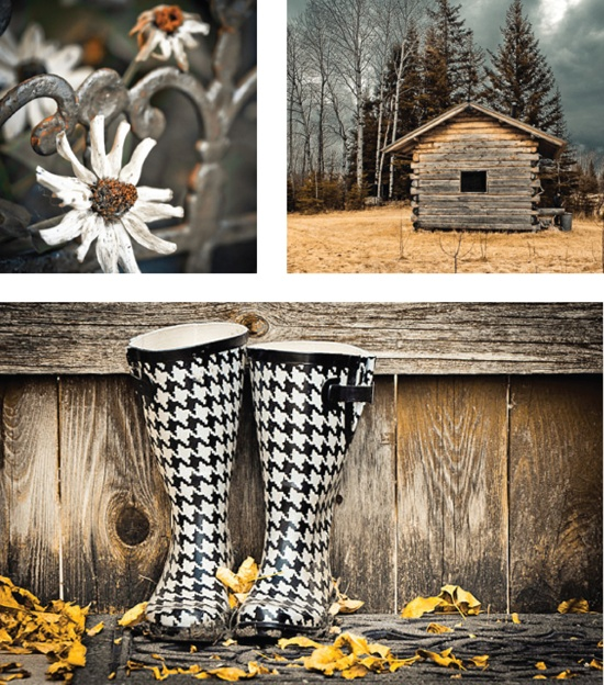 THE WATCHWORD: Stripes IMAGE CREDITS: See Article TAGS: #artist #feature #photography #rustic #rural #flower #rain_boots #stripe #yellow #blue #wrought_iron