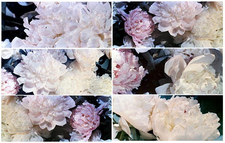 My fair lady: Peonies Flowers, Movie