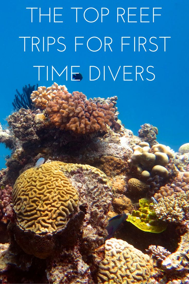 Want to visit the #greatbarrierreef and try #scuba #diving for the first time? Here are the best reef trips to try diving out on!