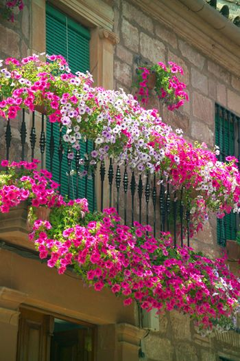 overflowing petunias on a balcony