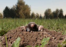 Mole activities for kids