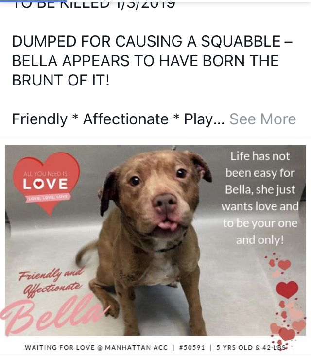 Bella Killed 01 04 19 To Die 01 04 19 Omg Heartbroken God Bless You Sweet Precious Girl Fly Free Nyc Dogs Pitbull Rescue Pet Organization