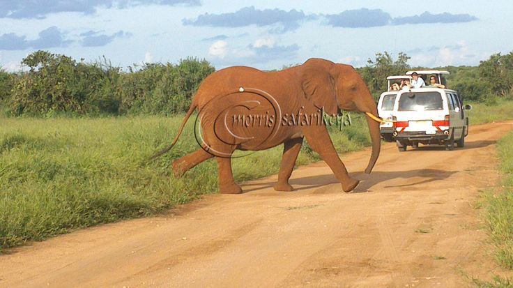tsavo est, 2days safari