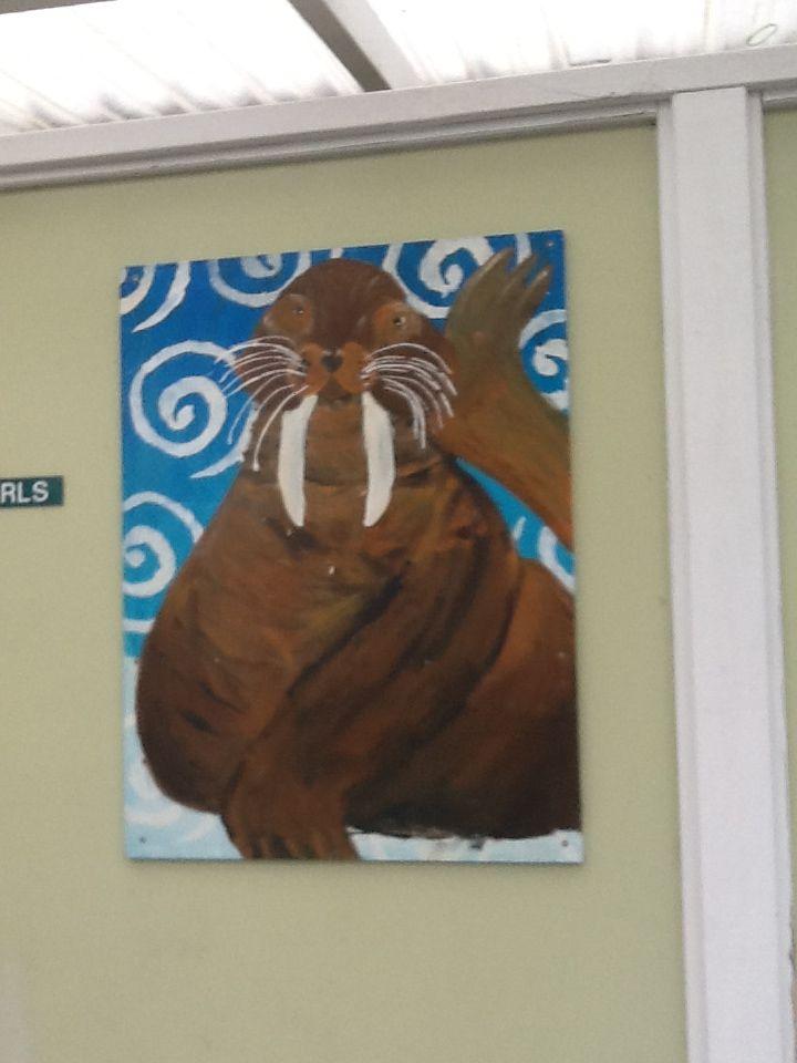 Cville Walrus