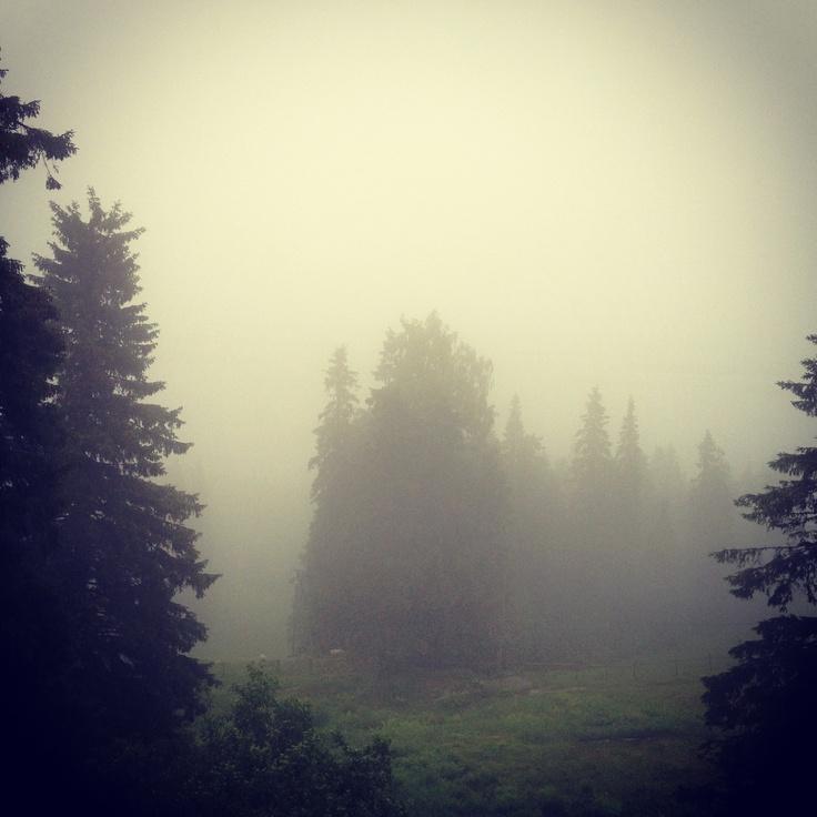 Koli, National Park on a foggy day...