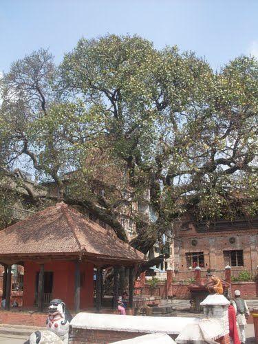 Bagalamukhi, Lalitpur
