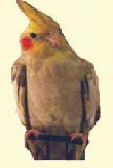 Best Tropical Parrot Rescue Read more: https://myspace.com/cockatielcare/mixes/streammix-714444/photo/373386084