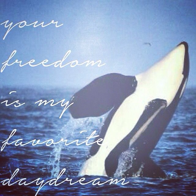 Freedom #orcarescues