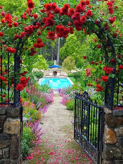 Red climbing roses- lovely entry   Outdoor Areas