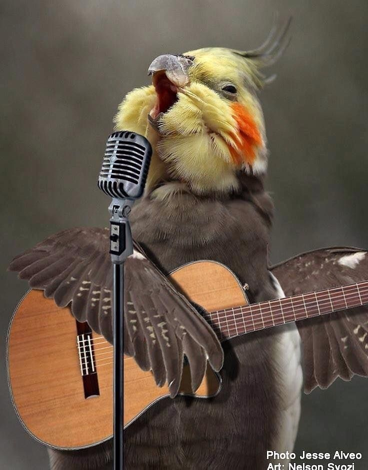 картинки на аву про попугаев можете