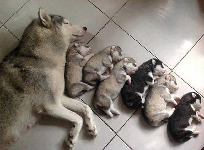 cadelas-com-seus-filhotes-2