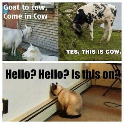 Funny animals - Talking - http://jokideo.com/funny-animals-talking/