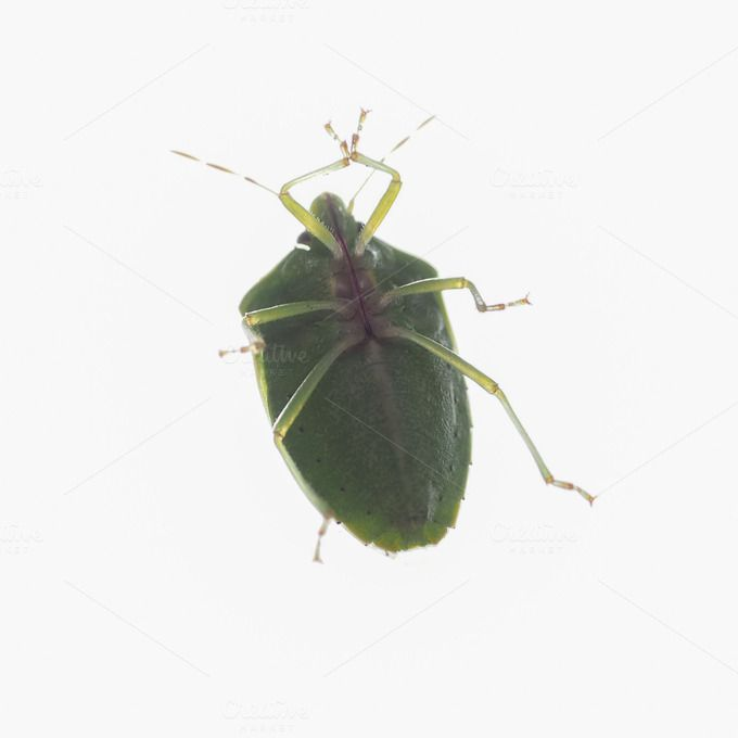 Check out Green shield bug by UK Photos - Europa Fotos on Creative Market